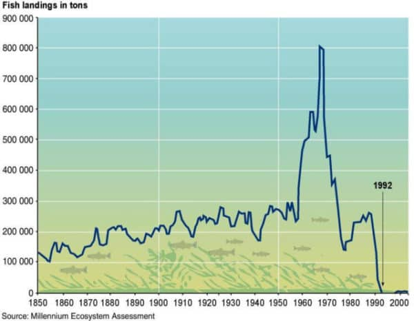 Graph of North Atlantic cod fishery, fish landing in tonnes, 1850 to 2000